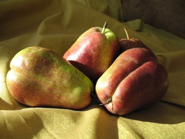 Seductress, the Pear