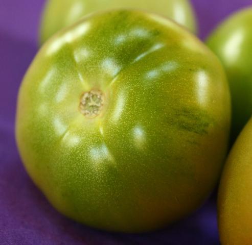 Beautiful Green tomatoes