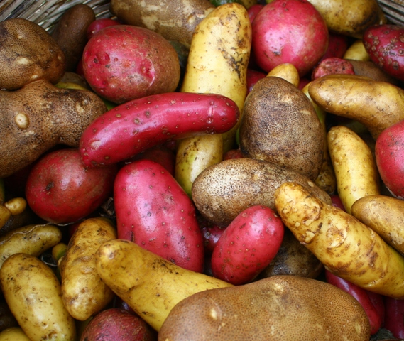 French fingerlings, Russian bananas, russets, and red potatoes