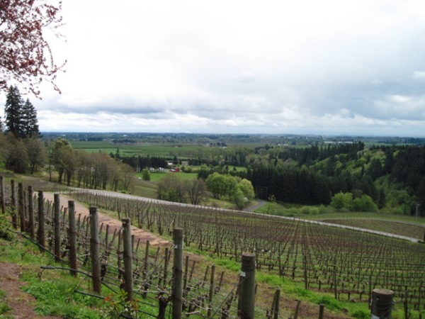 The rolling hills of Oregon Wine Country