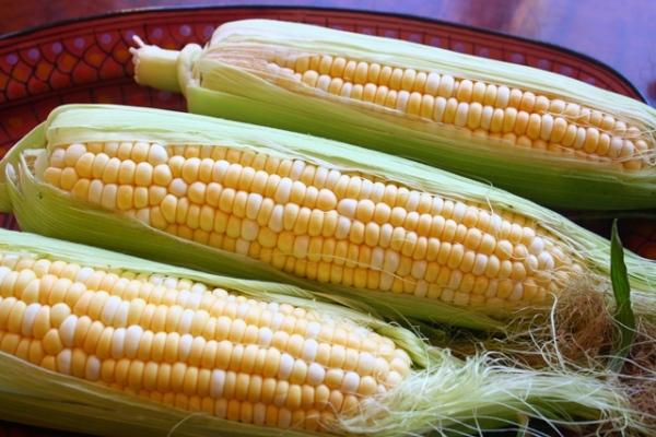Fresh multi colored corn