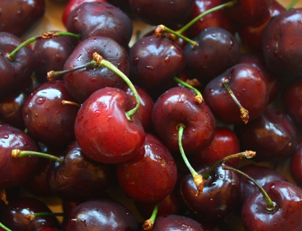 Beautiful bing cherries