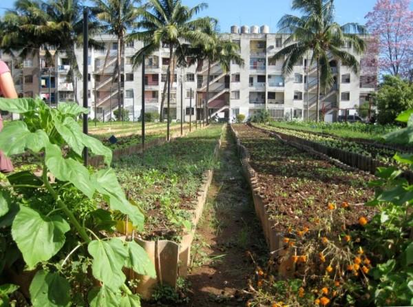 havana farming